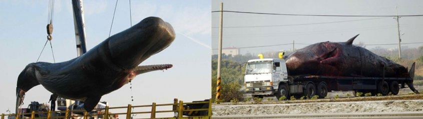 6 курьезных ДТП с грузовиками
